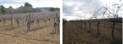 carol valles - viñedos - packandwine